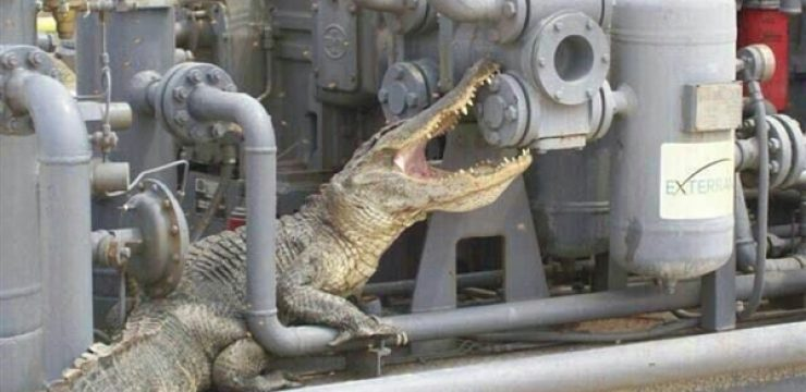 Alligator-iran-gas.jpg