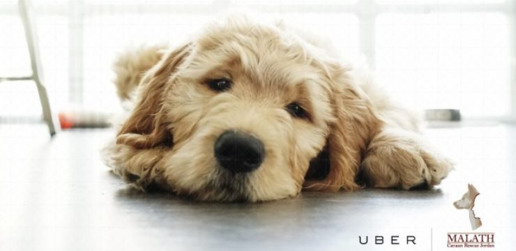 Amman_uberpuppies.jpg