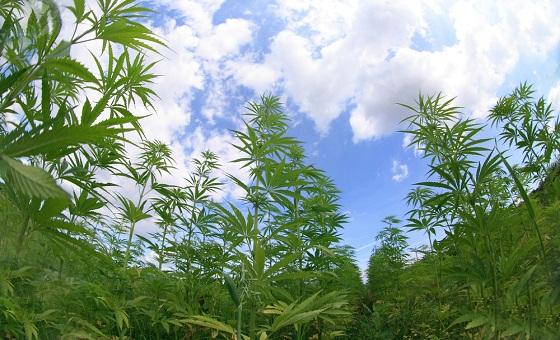 Israel to allow cannabis exports | Green Prophet | Impact