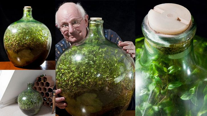50 Year Old Record Busting Bottled Terrarium And It S Not From