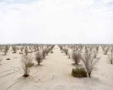Water turned off in Abu Dhabi desert tree experiment (photo)