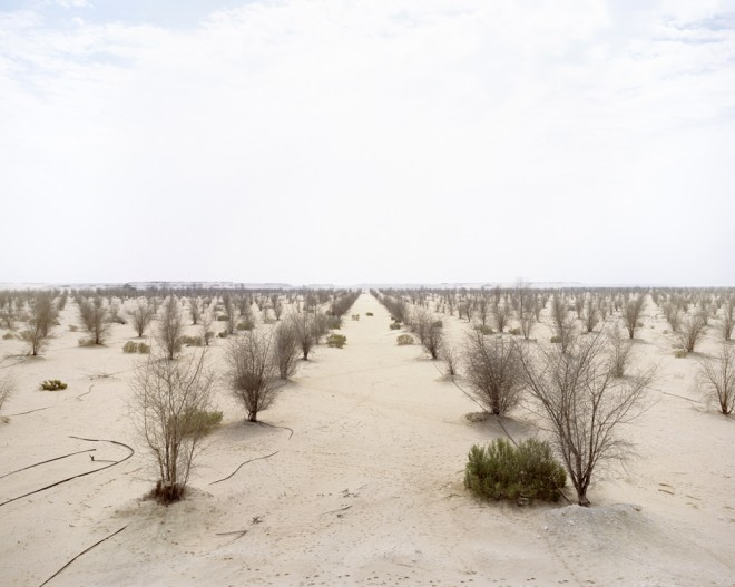 Dead Forest, Richard Allenby Pratt, eco-photography, Consumption, Abu Dhabi, desert forest, dead forest in the desert, water issues, water scarcity, halophytes, desert mangrove experiment
