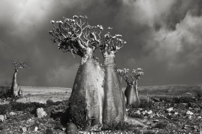 Beth Moon Portrait of Time