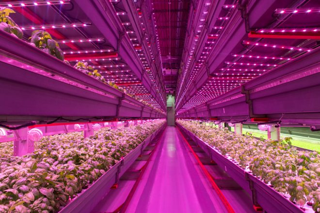 Farmed-Here-special-hydroponic-growing-project.jpg