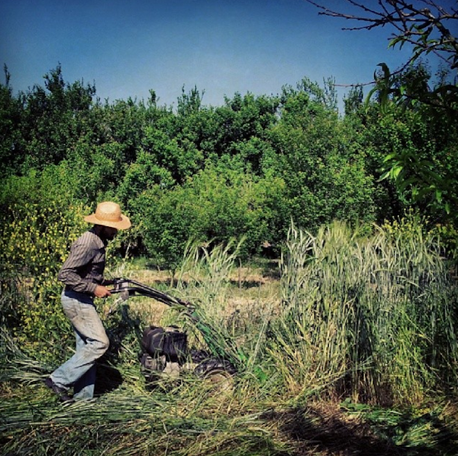 Iranian man shows #farmlove with inspiring Instagram photos