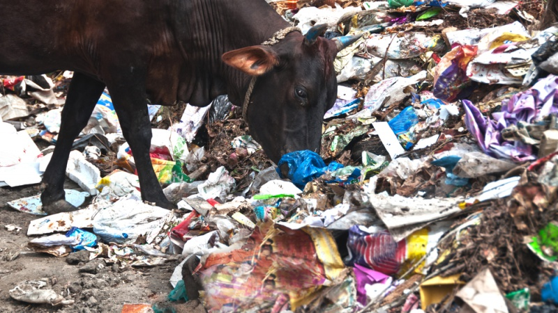 What happens after China's ban on foreign waste?