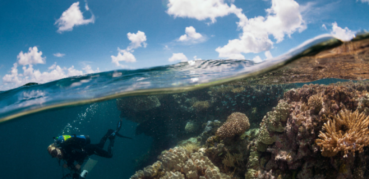Khaled-bin-Sultan-Living-Oceans-Foundation-french-polynesia-coral-reefs-3.png