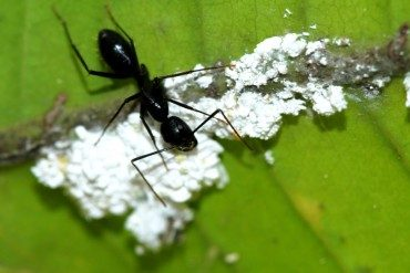 Step aside sheesha: Arab teens smoke crushed ants!
