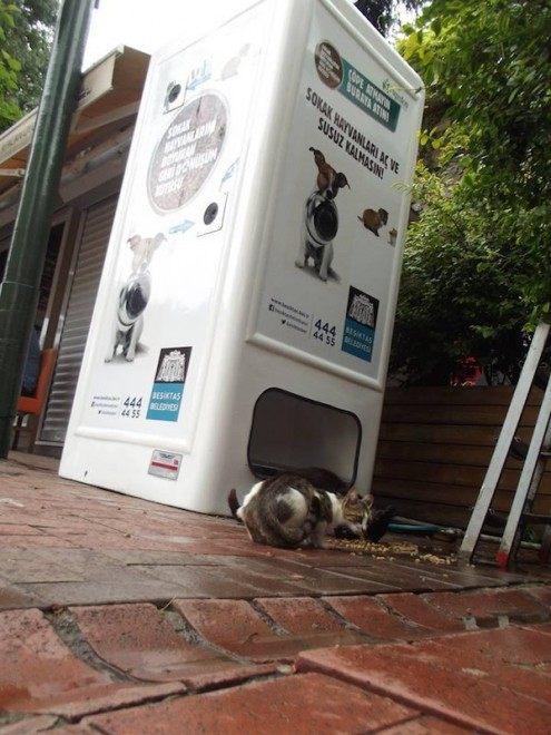 stray cats, stray animals, rabies, istanbul, turkey, pugedon, recycled materials, recycling plastic, plastic for kibble