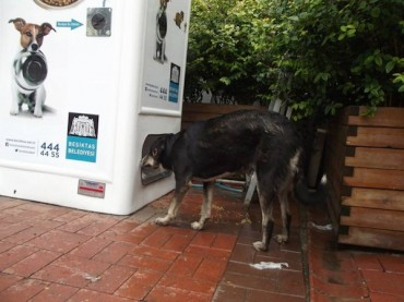 Plastic for kibble – vending machines for stray animals in Istanbul