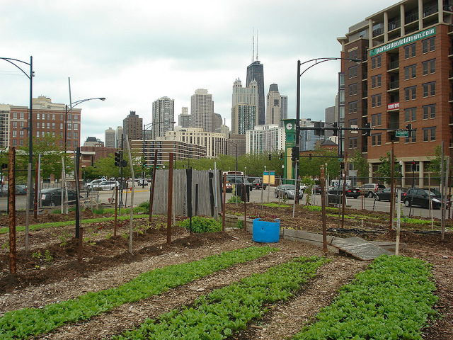 urban-farming-in-the-city