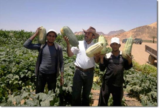 Wadi Rum Bedouins Defy Nature by Growing Organic Veggies