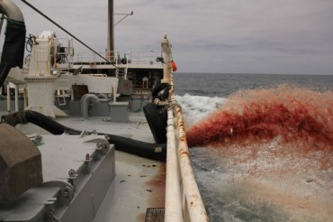 Moroccan fish trawlers pumping and dumping tons of dead fish into Sea [graphic video]