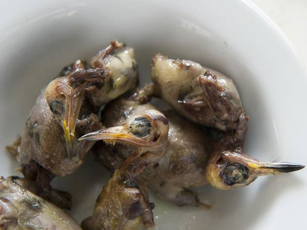 Cyprus kills 1.5 million migrating songbirds to eat in fetish dish