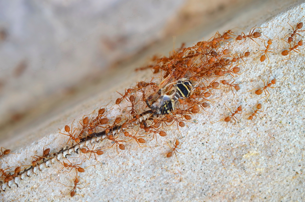 ants-carrying-food