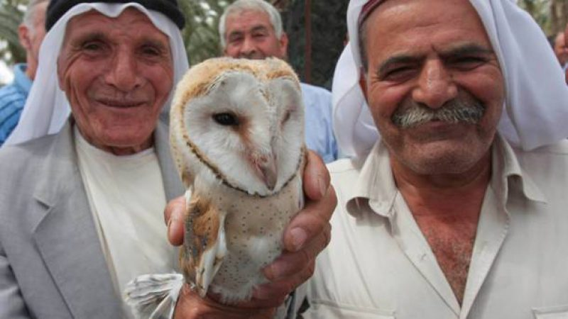 Abu Dhabi and Israel cooperate to save the birds