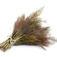 Bronze fennel on white background
