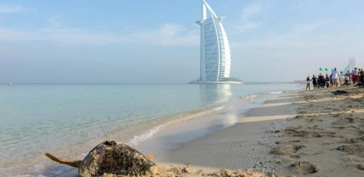 burj-al-arab-turtle-project.jpg