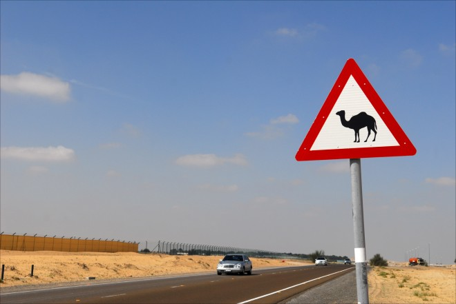 camel crossing road sign