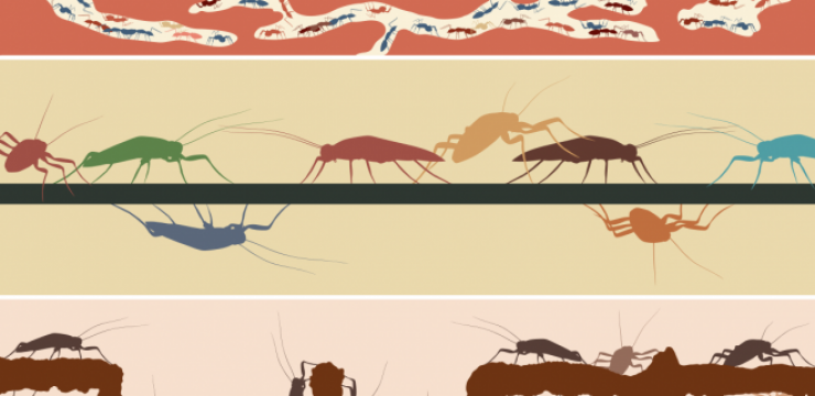 cockroaches-ants.png