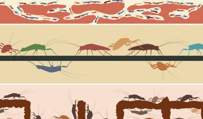 cockroaches and ants