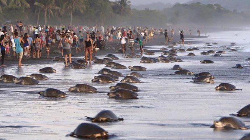 Save the turtles – from people!