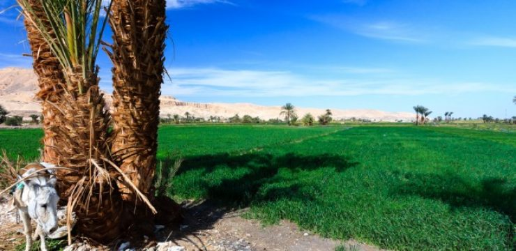 cultivated-field-near-Luxor.jpg