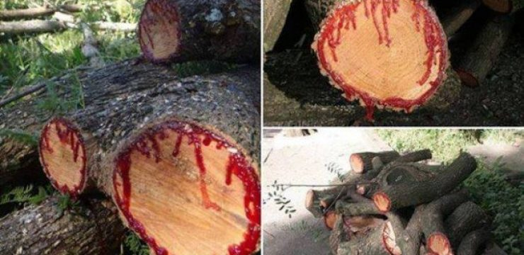 dragon-blood-tree-yemen.jpg