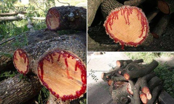 Trees have a sap-like blood
