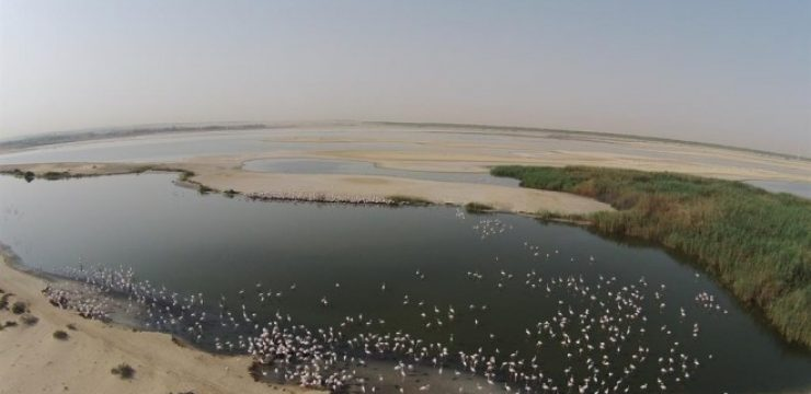 drone-images-of-the-breeding-birds-at-al-wathba-wetland-reserve.jpg