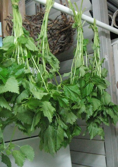 image drying nettles