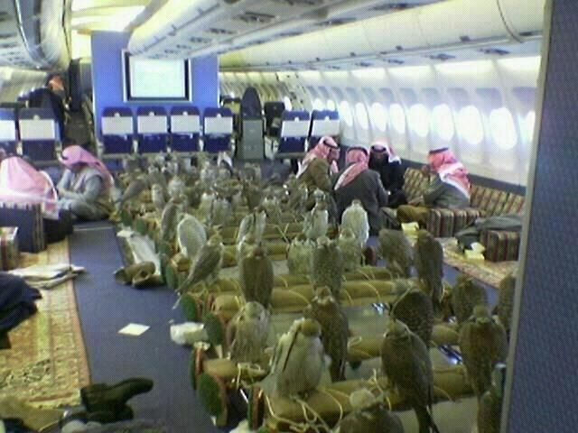 falcons on plane, Saudi prince