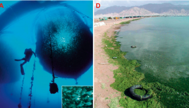Moving Red Sea fish farm cages shows positive eco results: new study