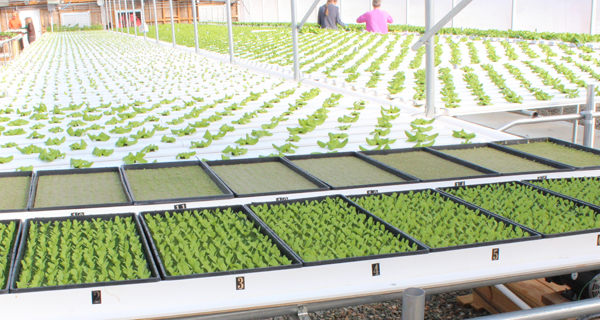 The Cropking Family Makes It Hydroponics Back To School