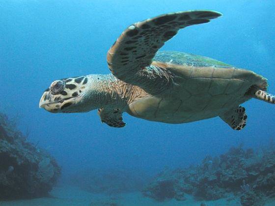 Abu Dhabi puts great effort in giving sea turtles their rightful home