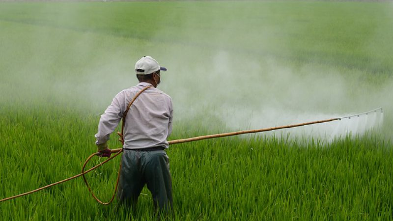 Blame Roundup For Celiac  And Gluten Intolerance Symptoms