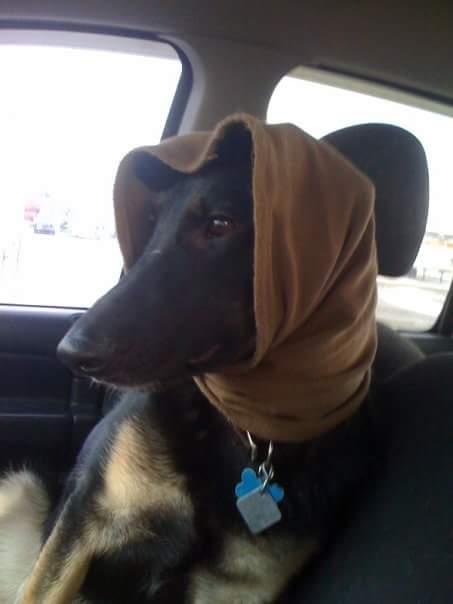 dog with hijab, iran, tehran dog walking ban in cars and in parks