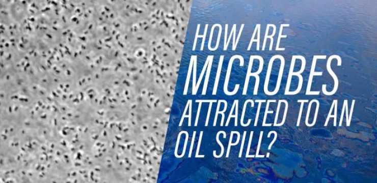 how-microbes-find-an-oil-spill.jpg