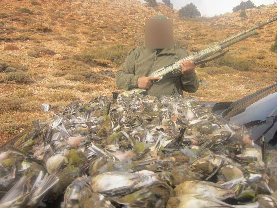 hunted wild birds in Lebanon