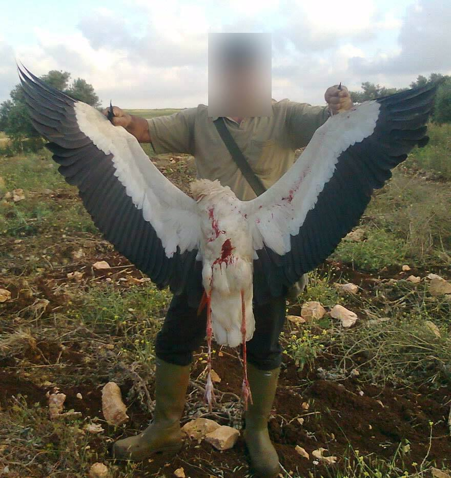 Europeans try to save storks, then this happens over Lebanon (warning graphic images)