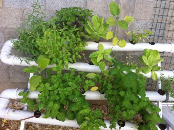 hydroponics in israel during shmita year
