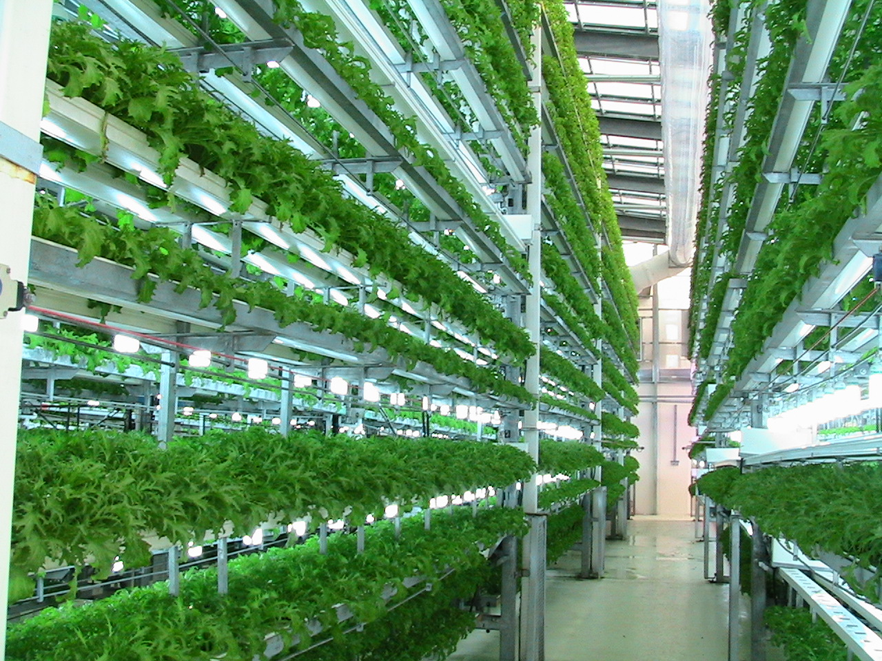hydroponics-agrown-CEA-food