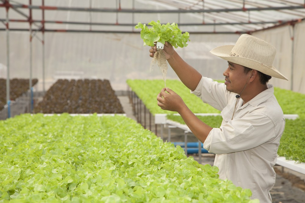 International airports source local farm food in 30 countries