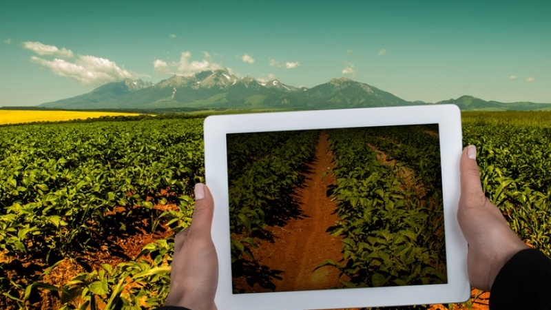 How Israel's agtech is feeding the world