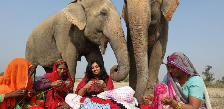 knitting-for-elephants.jpg