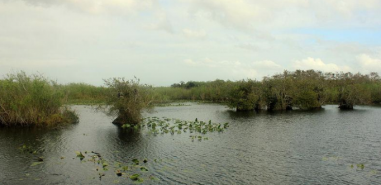 miami-wetlands-travel-2.png