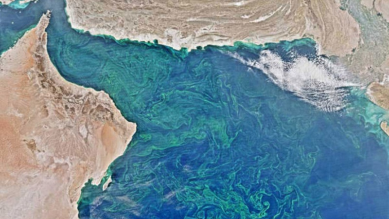 The Arabian Sea's Deadzone is Bigger than Florida, and it keeps growing