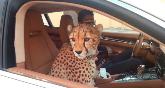 UAE bans wild animals