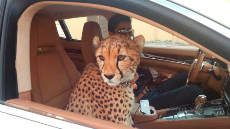 UAE bans private ownership of wild and exotic animals