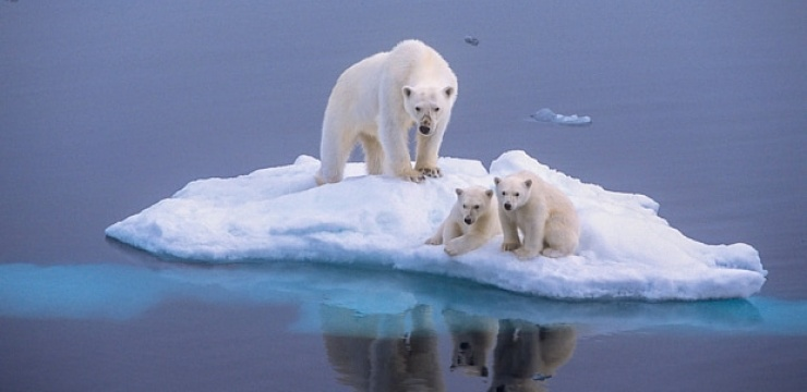 polar-bear-global-_3339474b.jpg